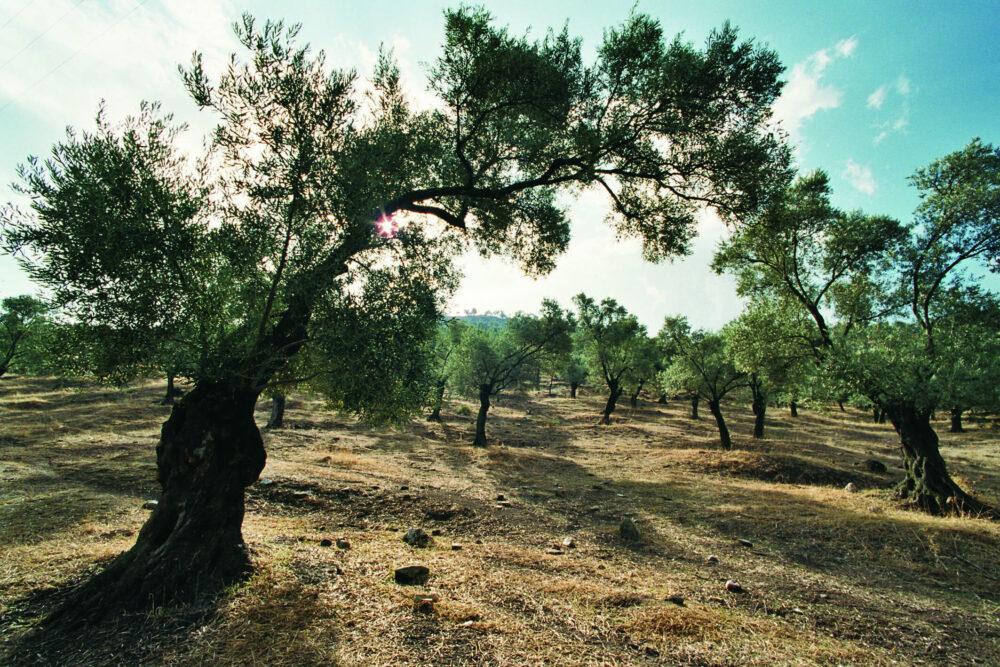 Doppelbäume